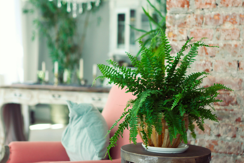 Why You Need Air-Purifying House Plants Right Now!
