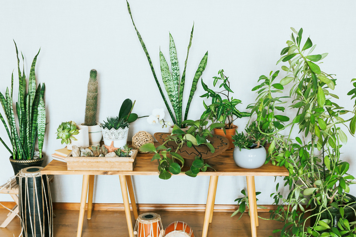 variety-of-house-plants